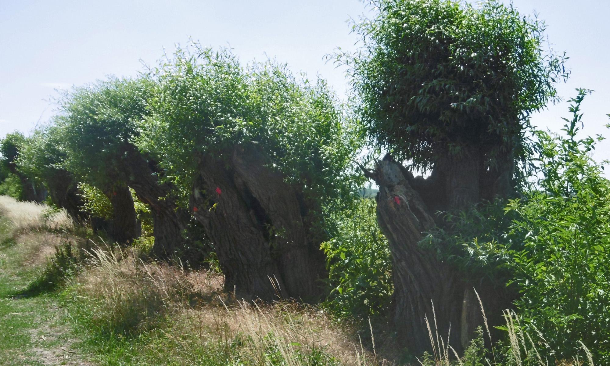 Landschaftspflege in der Altmark
